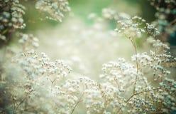 Τονισμένα κρητιδογραφία λουλούδια στοκ φωτογραφίες