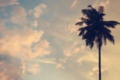 Τονισμένος αφηρημένος ουρανός Διάστημα αντιγράφων σε ένα ηλιοβασίλεμα στους τροπικούς κύκλους με τη σκιαγραφία του φοίνικα στον ο Στοκ Φωτογραφία