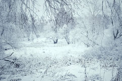 Τονισμένο χειμερινό τοπίο Στοκ Εικόνες