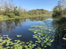 ΤΟΝ ΟΚΤΏΒΡΙΟ ΤΟΥ 2018, δάσος ελών της Τουρκίας δεύτερο μεγαλύτερο του γλυκού νερού: Acarlar σε Sakarya, Τουρκία στοκ φωτογραφίες