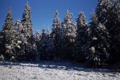 Τον όμορφο χειμώνα πιό forrest στην κορυφή ενός βουνού Στοκ Εικόνες