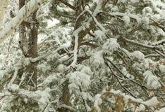 Τοπία δέντρων φωτογραφιών χιονιού Tahoe λιμνών Στοκ εικόνα με δικαίωμα ελεύθερης χρήσης
