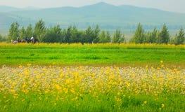 Τοπία και λουλούδια λιβαδιών Στοκ Εικόνες