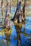 Τοπία Everglades στοκ εικόνες