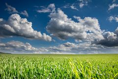 Τοπίο άνοιξης ή καλοκαιριού με το πράσινο λιβάδι και καταπληκτικός μπλε ουρανός με τα άσπρα σύννεφα στοκ εικόνες με δικαίωμα ελεύθερης χρήσης
