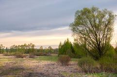 Τοπίο άνοιξη, ανατολή ανατολής Λιβάδι με τα δέντρα, αγροτικό έδαφος Στοκ φωτογραφία με δικαίωμα ελεύθερης χρήσης