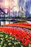 Τοπίο άνοιξη με τα ζωηρόχρωμα εποχιακά λουλούδια στοκ εικόνες
