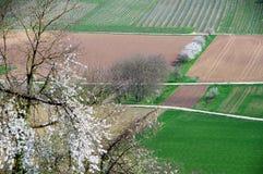 Τοπίο άνοιξη με τις αμπέλους και τα ανθίζοντας δέντρα και το δάσος Στοκ φωτογραφίες με δικαίωμα ελεύθερης χρήσης