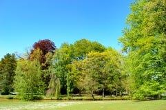 Τοπίο άνοιξη με το φρέσκο πράσινο νέο φύλλωμα Στοκ εικόνες με δικαίωμα ελεύθερης χρήσης