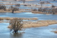 Τοπίο άνοιξη - πλημμύρα στην κοιλάδα ποταμών του Siverskyi Seversky Donets, λιβάδια, δέντρα, πουλιά Στοκ Εικόνες