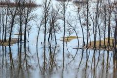 Τοπίο άνοιξη - πλημμύρα στην κοιλάδα ποταμών του Siverskyi Seversky Donets με τα απεικονισμένα δέντρα στο νερό Στοκ Φωτογραφίες