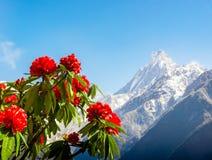 Τοπίο άνοιξη στο Νεπάλ στοκ φωτογραφία με δικαίωμα ελεύθερης χρήσης
