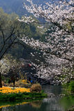 Τοπίο άνοιξη στο πάρκο Hangzhu Στοκ εικόνα με δικαίωμα ελεύθερης χρήσης