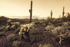 Τοπίο δέντρων κάκτων ερήμων της Αριζόνα Στοκ εικόνα με δικαίωμα ελεύθερης χρήσης