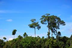 Τοπίο δέντρων Στοκ Εικόνες