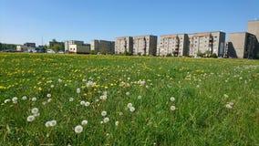 Τοπίο λίγης πόλης Mazeikiai στη Λιθουανία Λιβάδι με τις άσπρες πικραλίδες Στοκ φωτογραφία με δικαίωμα ελεύθερης χρήσης