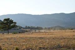 Τοπίο αγροτών της βόρειας Κύπρου Στοκ φωτογραφία με δικαίωμα ελεύθερης χρήσης