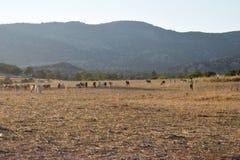 Τοπίο αγροτών της βόρειας Κύπρου Στοκ Φωτογραφία