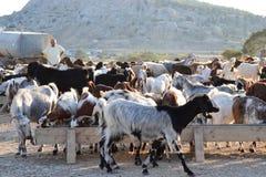 Τοπίο αγροτών της βόρειας Κύπρου Στοκ εικόνες με δικαίωμα ελεύθερης χρήσης