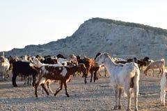 Τοπίο αγροτών της βόρειας Κύπρου Στοκ Φωτογραφίες