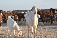 Τοπίο αγροτών της βόρειας Κύπρου Στοκ Εικόνες