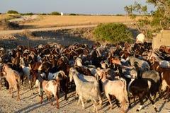 Τοπίο αγροτών της βόρειας Κύπρου Στοκ εικόνα με δικαίωμα ελεύθερης χρήσης