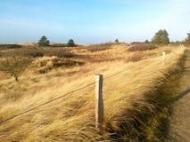 Τοπίο αμμόλοφων με marram τη χλόη στην ακτή Βόρεια Θαλασσών Στοκ φωτογραφία με δικαίωμα ελεύθερης χρήσης