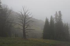 Τοπίο από το εθνικό πάρκο Yellowstone Στοκ Εικόνες