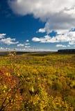 Τοπίο δασικών δέντρων πτώσης φθινοπώρου απότομων βράχων Croker ακρωτηρίων Στοκ Εικόνα