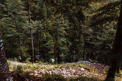 Τοπίο, βουνά και δασικό υπόβαθρο Στοκ Εικόνες