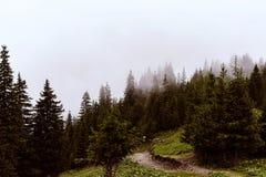 Τοπίο, βουνά και δασικό υπόβαθρο Στοκ Φωτογραφίες