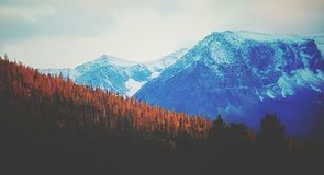Τοπίο βουνών δέντρων φύσης στοκ εικόνες