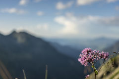 Τοπίο βουνών και πορφυρό λουλούδι στοκ φωτογραφία