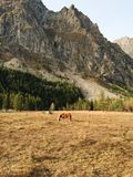 Τοπίο βουνών με ένα άλογο στοκ φωτογραφίες