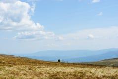 Τοπίο βουνών με ένα δέντρο μόνο δέντρο Στοκ εικόνες με δικαίωμα ελεύθερης χρήσης