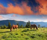 Τοπίο βουνών με τα άλογα στοκ εικόνα