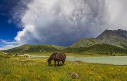 Τοπίο βουνών με τα άλογα Στοκ εικόνες με δικαίωμα ελεύθερης χρήσης