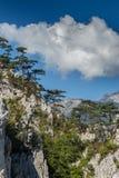 Τοπίο βουνών με τα δέντρα μαύρων πευκών Στοκ Φωτογραφίες
