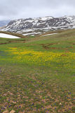 Τοπίο βουνών με τα κίτρινα και μπλε λουλούδια και το λειώνοντας χιόνι Στοκ Φωτογραφία