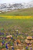 Τοπίο βουνών με τα κίτρινα και μπλε λουλούδια και το λειώνοντας χιόνι Στοκ εικόνες με δικαίωμα ελεύθερης χρήσης