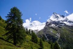 Τοπίο βουνών με τις υψηλές αιχμές και τα πράσινα χλοώδη λιβάδια και δέντρα στην κοιλάδα Zinal της Ελβετίας Στοκ εικόνες με δικαίωμα ελεύθερης χρήσης