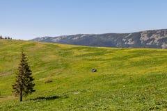 Τοπίο βουνών με το πράσινο δέντρο λιβαδιού και πεύκων Στοκ φωτογραφία με δικαίωμα ελεύθερης χρήσης