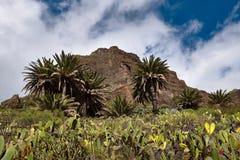 Τοπίο βουνών στο τροπικό νησί Tenerife, καναρίνι στην Ισπανία στοκ εικόνα με δικαίωμα ελεύθερης χρήσης