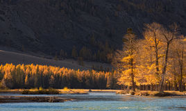 Τοπίο βουνών φθινοπώρου με τα ηλιοφώτιστα δέντρα και ένα κρύο μπλε rive στοκ εικόνα με δικαίωμα ελεύθερης χρήσης