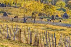 Τοπίο βουνών φθινοπώρου με τους σωρούς και τα ζώα όμορφος ήλιος Στοκ Εικόνες