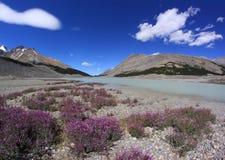 Τοπίο βουνών. Canadian Rockies. Εθνικό πάρκο ιασπίδων, Αλμπέρτα, Καναδάς στοκ φωτογραφίες