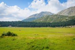 Τοπίο βουνών Idillic το καλοκαίρι στο Μαυροβούνιο, Ευρώπη στοκ φωτογραφία