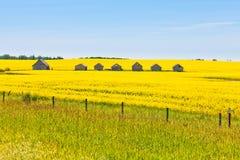 Τοπίο γεωργίας τομέων canola αγροτικών καλυβών Στοκ Εικόνες