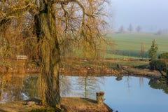 Τοπίο - δέντρο, λίμνη και τομέας Στοκ Εικόνες