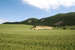 τοπίο δημητριακών Στοκ φωτογραφία με δικαίωμα ελεύθερης χρήσης